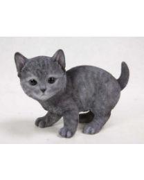 Cat - Russian Blue Kitten