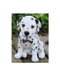 Pet Pals - Dalmatian Puppy