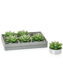 Succulent Spike Echeveria Tealights Set of Six