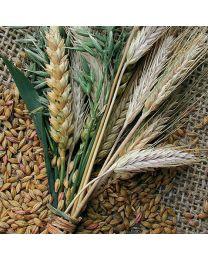 Napkins Prairie Harvest - Luncheon Napkin