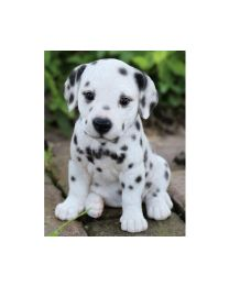 Pet Pals - Dalmatian Puppy