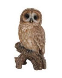 Tawny Owl on Stump - Small