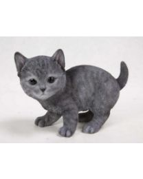 Cat - Russian Blue Kitten