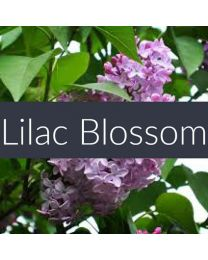 Lilac Blossom Fragrance Oil