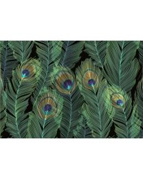 NOTE CARD - FEATHERS