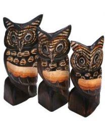 OWL - AMBER S/3